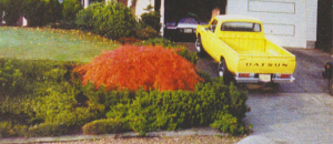 Sitting in the drive way of our beautiful home in Renton, WA. I drove this Datsun for 72,000 miles and only put gas in , changed the oil and installed one set of tires.
